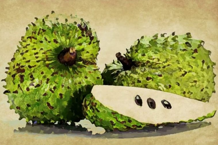 Soursop Benefits