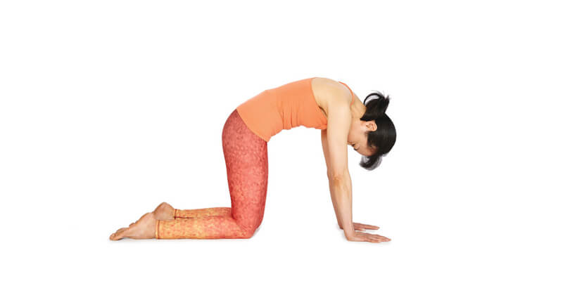 Cat Pose for Back Pain Relief