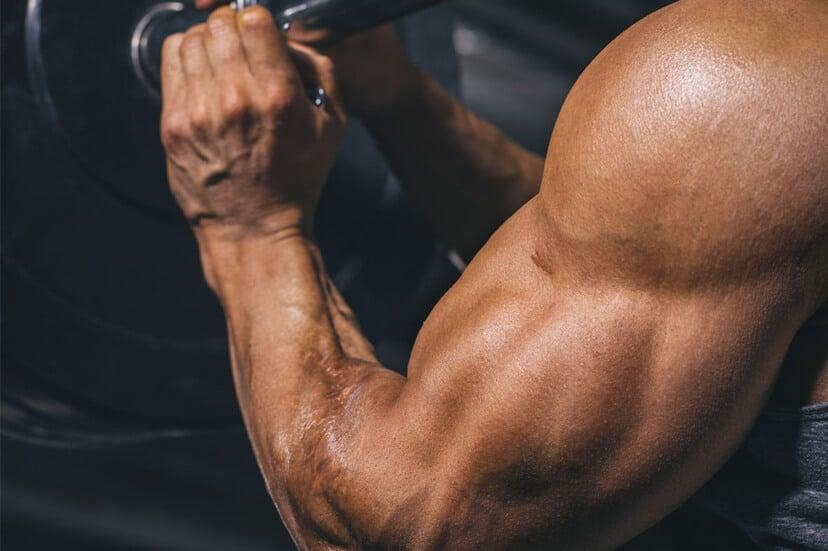Brachialis Exercises for Bigger Arms