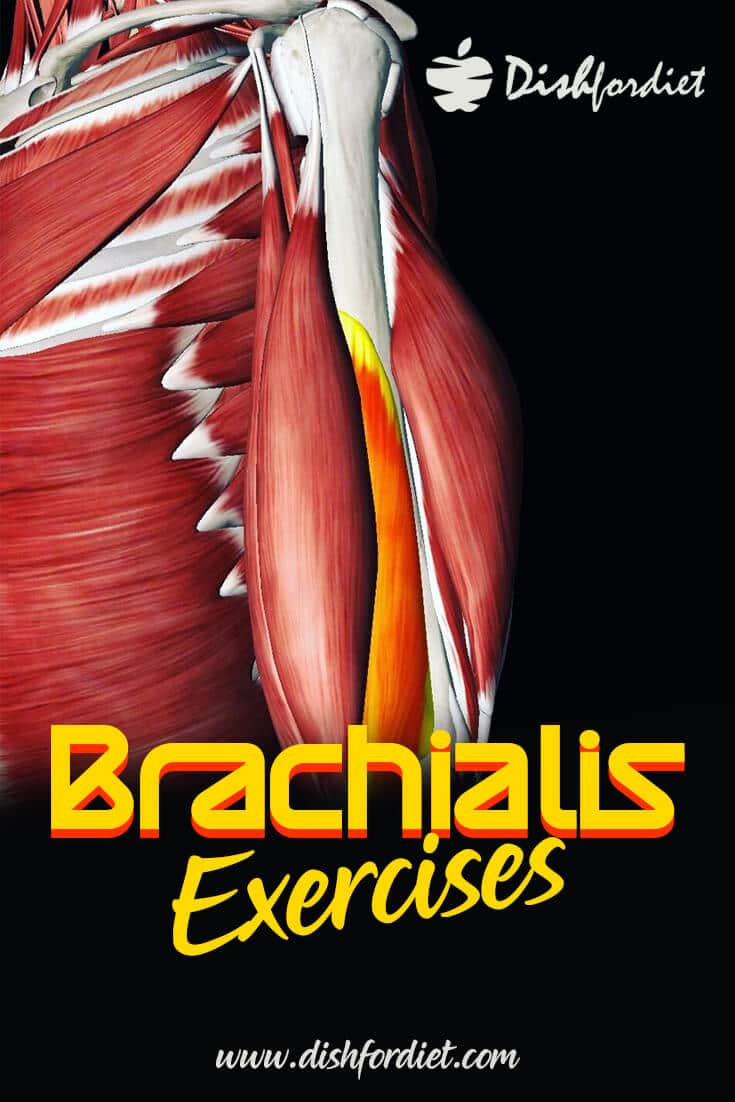 Best Brachialis Exercises