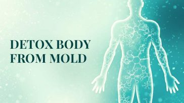 How to Detox Your Body from Mold